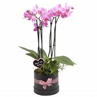 Composition mum - boite Chapeau + phalaenopsis p12