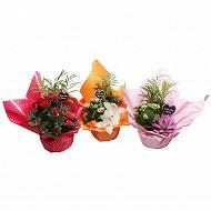 Composition jardin secret - 3 plantes diamètre 18 cm