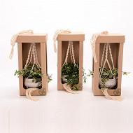 Plantes vertes mixtes dans suspension avec boite de presentation