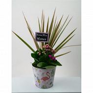 Composition fête des mères 2 plantes référence 57434