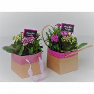 Arrangement plantes fdm