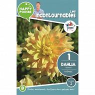 Happy pousse dahlia décoratif bysance Ix1