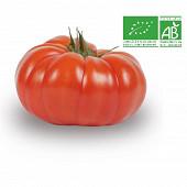 Tomate cotelée rouge bio