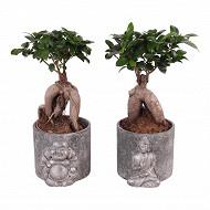 Ficus ginseng céramique argent bouddha assis
