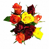 9 roses 50 cm bouton 3.8 cm  Arlequin