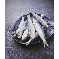 Sardine s/at