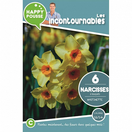 6 narcisse bouquet martinette 12/14