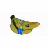Banane cora ruban 6 fruits