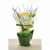 Herbe fraiche bio ciboulette