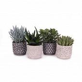 """Succulentes mixtes dans céramique """"tonsberg"""" diam 12 cm ht 13-15 cm"""