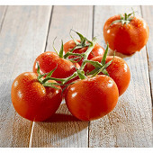 Tomate ronde grappe