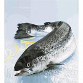 Saumon entier 1/2 kg