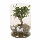Bonsai + mousse en vase verre