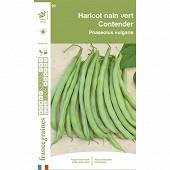 Francegraines haricot contender nain mangetout