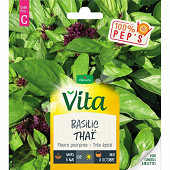 Vita Vilmorin basilic thai