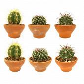 Cactus et succulentes pot de 15 cm terre cuite
