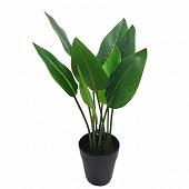 Strelitzia 44 cm - 9 feuilles