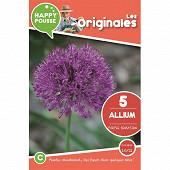 5 allium purple sensation 10/12