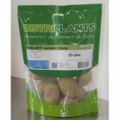 Rikea 28/35 clipack 25 plants
