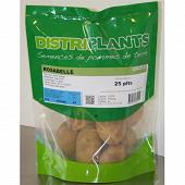 Pomme de terre rosabelle 25x35 verbag de 25 plants