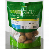 Pomme de terre reine 25/32 25 plants