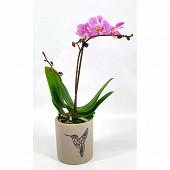 Orchidée phalaenopsis 1 tige pot de 9 cm