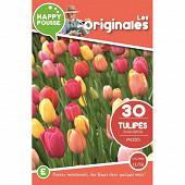 30 tulipe dwh en melange 11/12