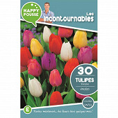 30 tulipe triomphe en melange  10/11