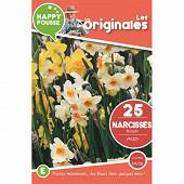 25 narcisse bouquet en melange 10/12
