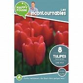 8 tulipe dwh come back 11/12