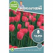 8 tulipe dwh van eijk 11/12