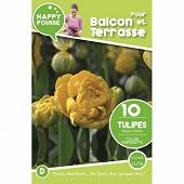 10 tulipe double tardive yellow pomponette 11/12