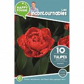 10 tulipe double tardive miranda 11/12