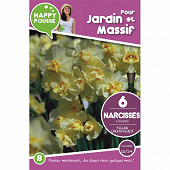 6 narcisse bouquet yellow cheerfulness 12/14