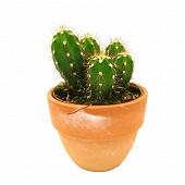 Cactus et succulentes couvre pot 12 cm