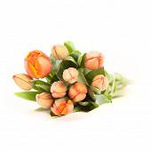 10 tulipes unicolores coloris assortis