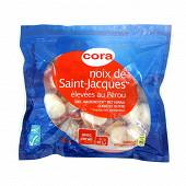 Cora noix de Saint Jacques élévées au Pérou avec corail 400g