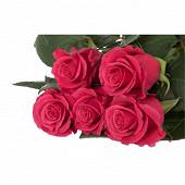 Bouquet 7 roses fuschia gros boutons hauteur 50 cm