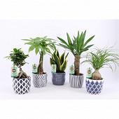 Plantes vertes résistantes variées pot diam 12cm ceramique