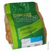 Alouette 28/35 verbag de 25 plants