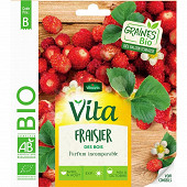 Vita vilmorin fraisier des bois bio